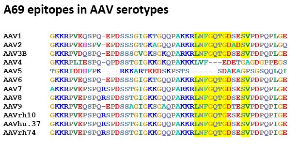 anti-AAV VP1/VP2 mouse monoclonal, A69, lyophilized, purified