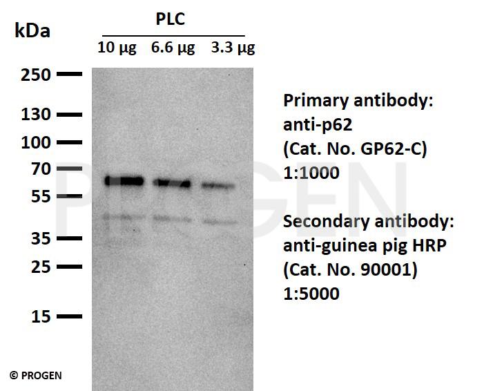 anti-guinea pig IgG goat polyclonal, HRP conjugate