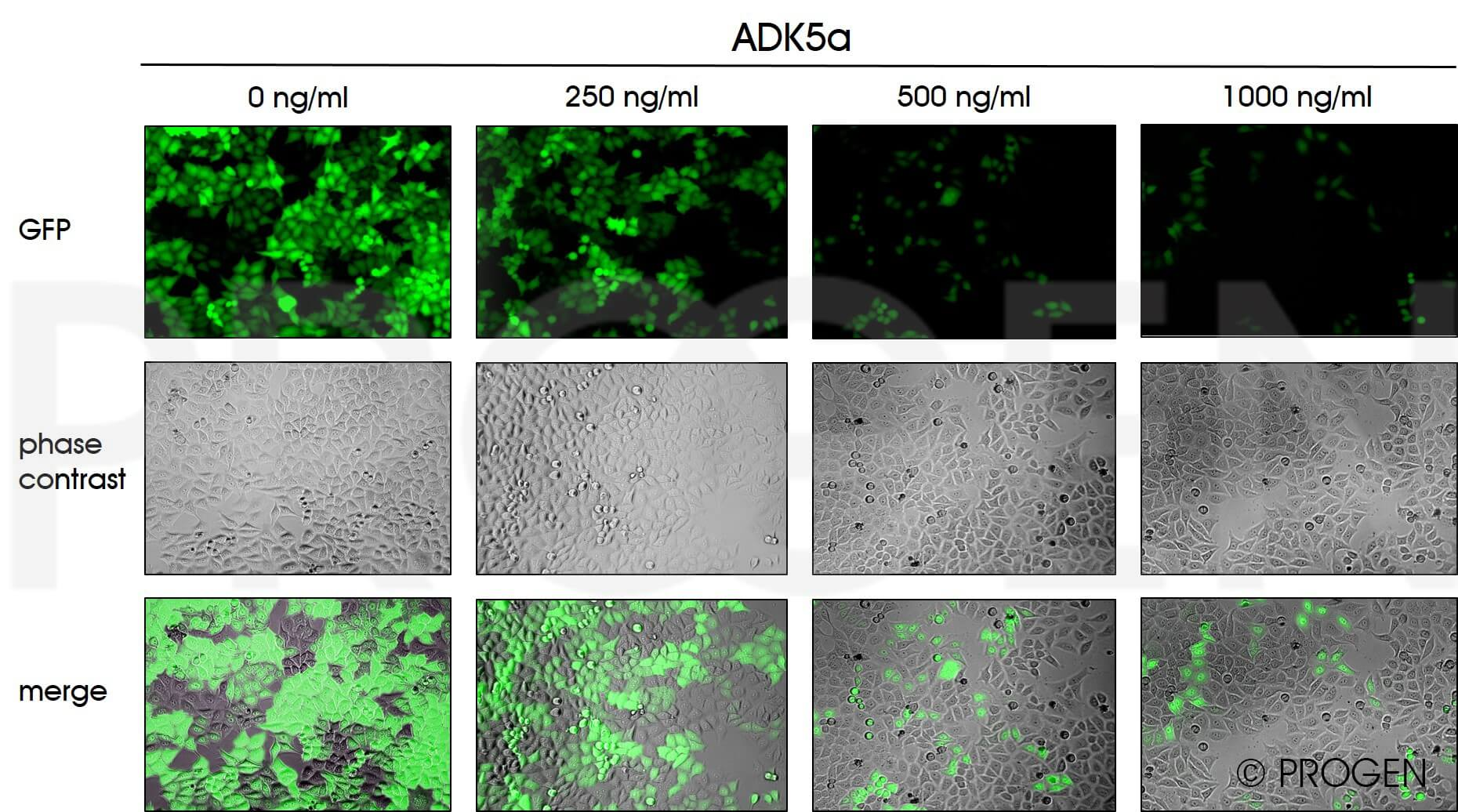 anti-AAV5 (intact particle) mouse monoclonal, ADK5a, lyophilized, purified