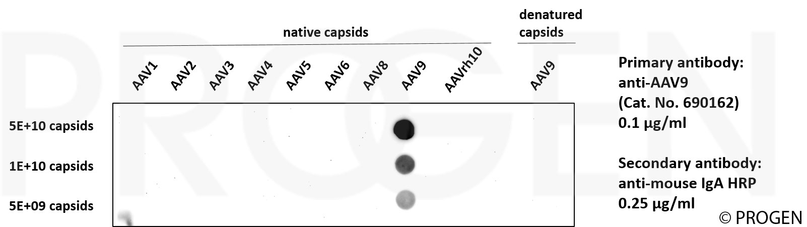 anti-AAV9 (intact particle) mouse monoclonal, ADK9, supernatant