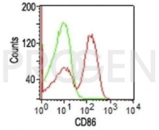 anti-CD86 mouse monoclonal, EBS-CD-042, purified