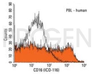 anti-CD16 mouse monoclonal, ICO-116, purified